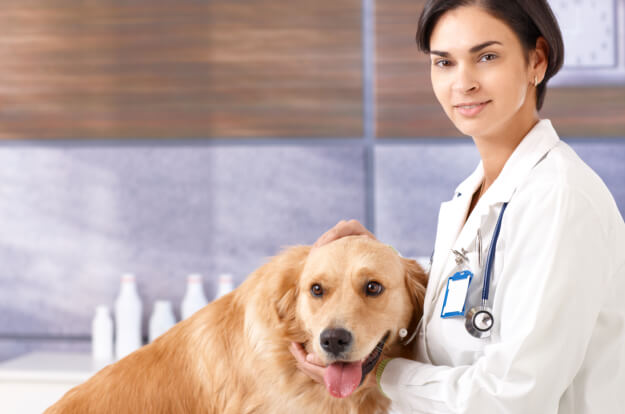 4 Tips on Saving for your Pet's Medications