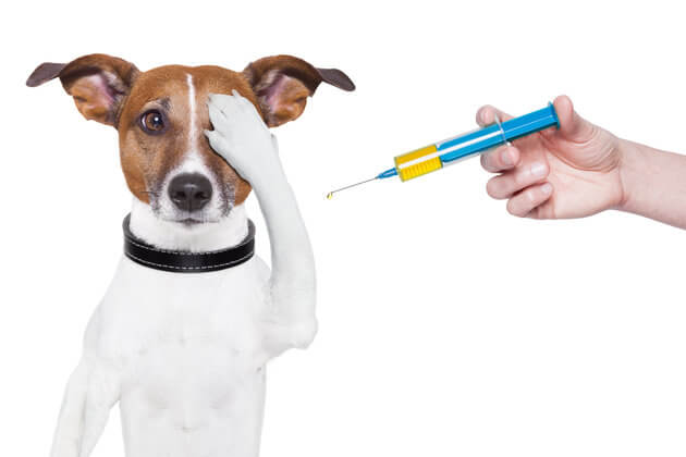 3-common-medication-types-pet
